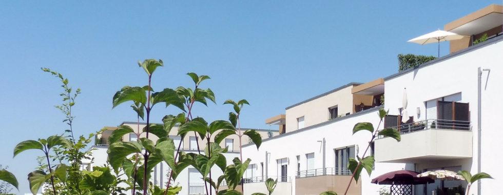 Bezugsfrei! Neuwertige 3-Zimmer-Eigentumswohnung mit Balkon!